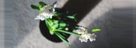 μετακίνηση φυτών