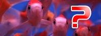 ψάρια κατούρημα