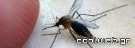 κουνούπια και σίτες