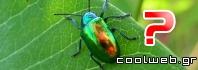 Γιατί πολλά έντομα έχουν ιριδίζον χρώμα