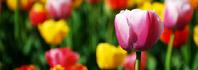 χρώματα λουλούδια