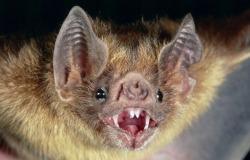 νυχτερίδες πίνουν αίμα
