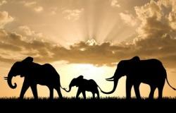τι δεν κάνουν οι ελέφαντες