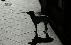αδέσποτο σκυλί
