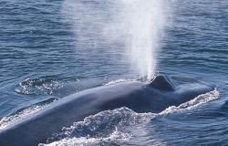 φάλαινες αναπνοή