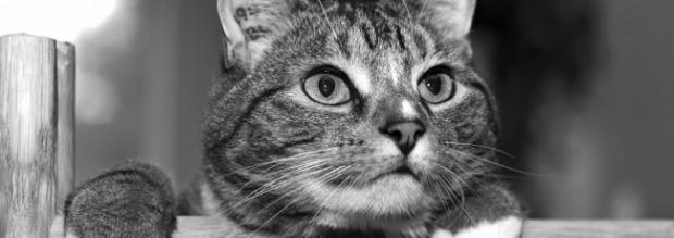 Που χρησιμεύουν τα μουστάκια της γάτας