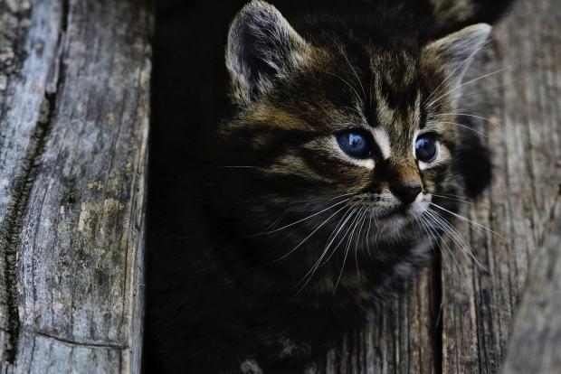 τι χρησιμότητα έχουν τα μουστάκια της γάτας