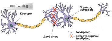 αλκοόλ καταστρέφει κύτταρα
