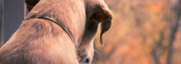 Αντιμετώπιση ψύλλων σε σκυλιά