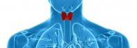 Τι είναι και που εξυπηρετεί ο θυρεοειδής αδένας