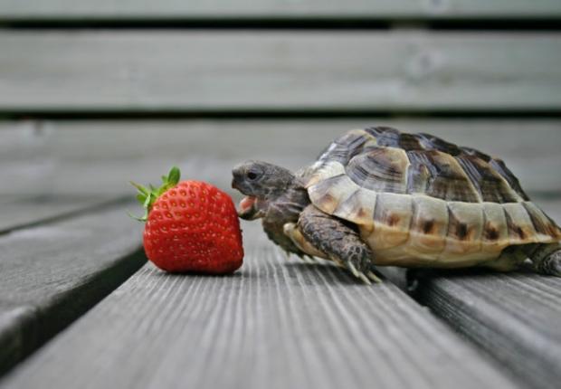 τρώμε με ρυθμούς χελώνας και μασάμε καλά