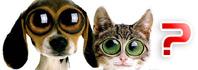 όραση σκύλου και γάτας