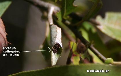 έντομα φύλλα έδαφος