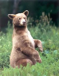 επιβίωση αρκούδας