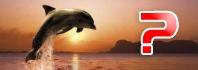δελφίνια πηδάνε
