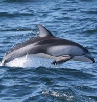 δελφίνια και ενέργεια