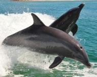 ψυχαγωγία δελφινιών