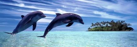δελφίνια πηδάνε έξω από το νερό