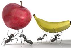 μυρμήγκια κουβαλάνε