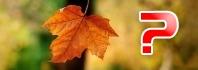 φύλλα πέφτουν