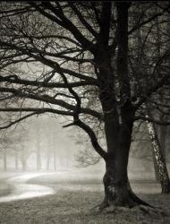 δέντρα ρίχνουν φύλλα