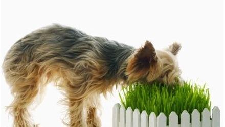 διατροφή σκύλου