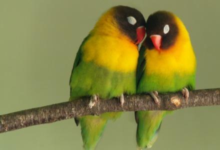 πουλί στο κλαδί