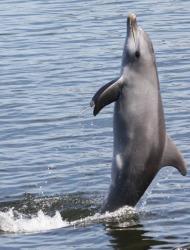 δελφίνια στο νερό
