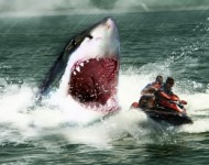 επίθεση καρχαρία