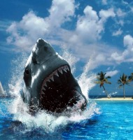 επιθέσεις καρχαρία σε άνθρωπο