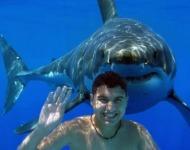 θύμα καρχαρία