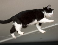 ισορροπία γάτας