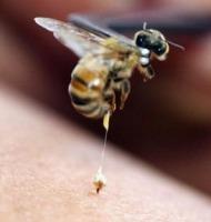 μέλισσα τσιμπάει