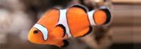 αναπνοή ψαριών