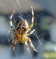 αράχνες φτιάχνουν ιστό