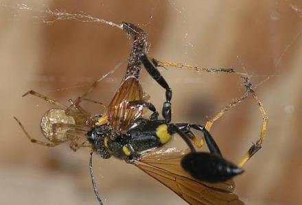 ιστός αράχνης