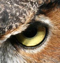 όραση κουκουβάγιας