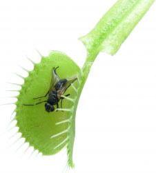φύλλα φυτού τρώνε έντομα