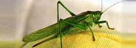 έντομα και αναπνοή