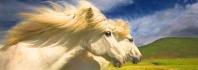 άλογα παράξενα