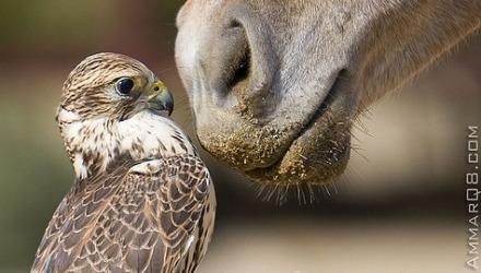 παράξενα και περίεργα άλογα