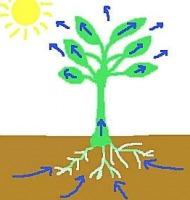 φυτά και νερό