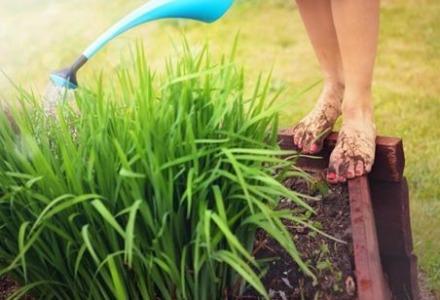 πότισμα φυτών