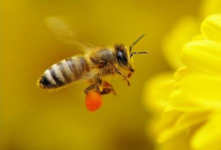 rφτερά μέλισσας