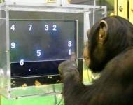 έξυπνα ζώα