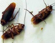 πως να διώξετε τις κατσαρίδες