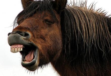 άλογα δεν κάνουν εμμετό