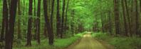 δροσιά στο δάσος