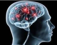 μνήμη και εγκέφαλος