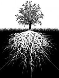 ρίζες δέντρου
